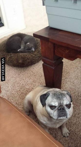 Mačka mu je ukrala krevet, njegova faca sve govori.