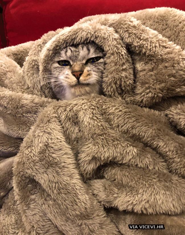 Ja u zimi!